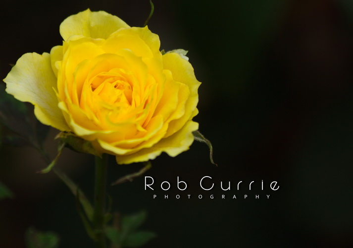 Welcome to robcurriephotography.com
